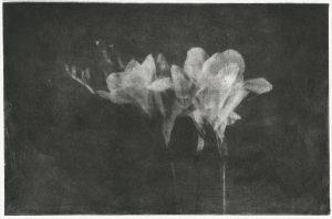 Цветы фототипия