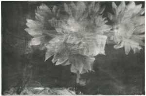 Flowers collotype